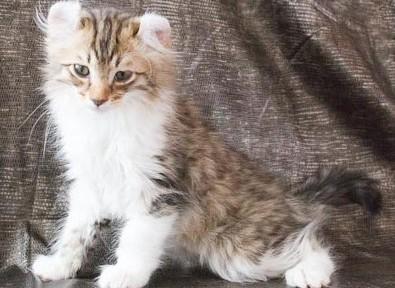 Котенок Например